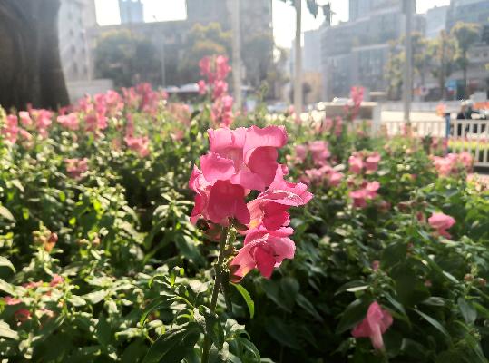 花坛内的小花也绽放着笑脸