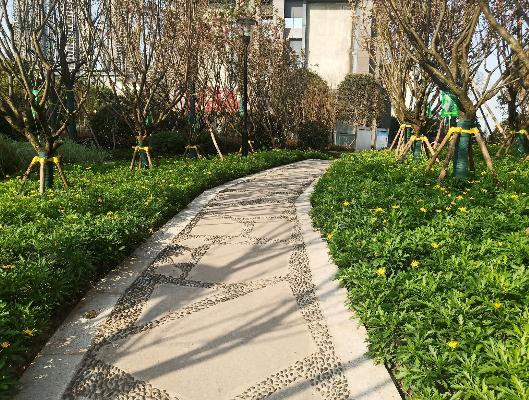 休闲便道两旁的小草吐出嫩绿的叶子,绽放美丽的花朵,装扮着春天的大地