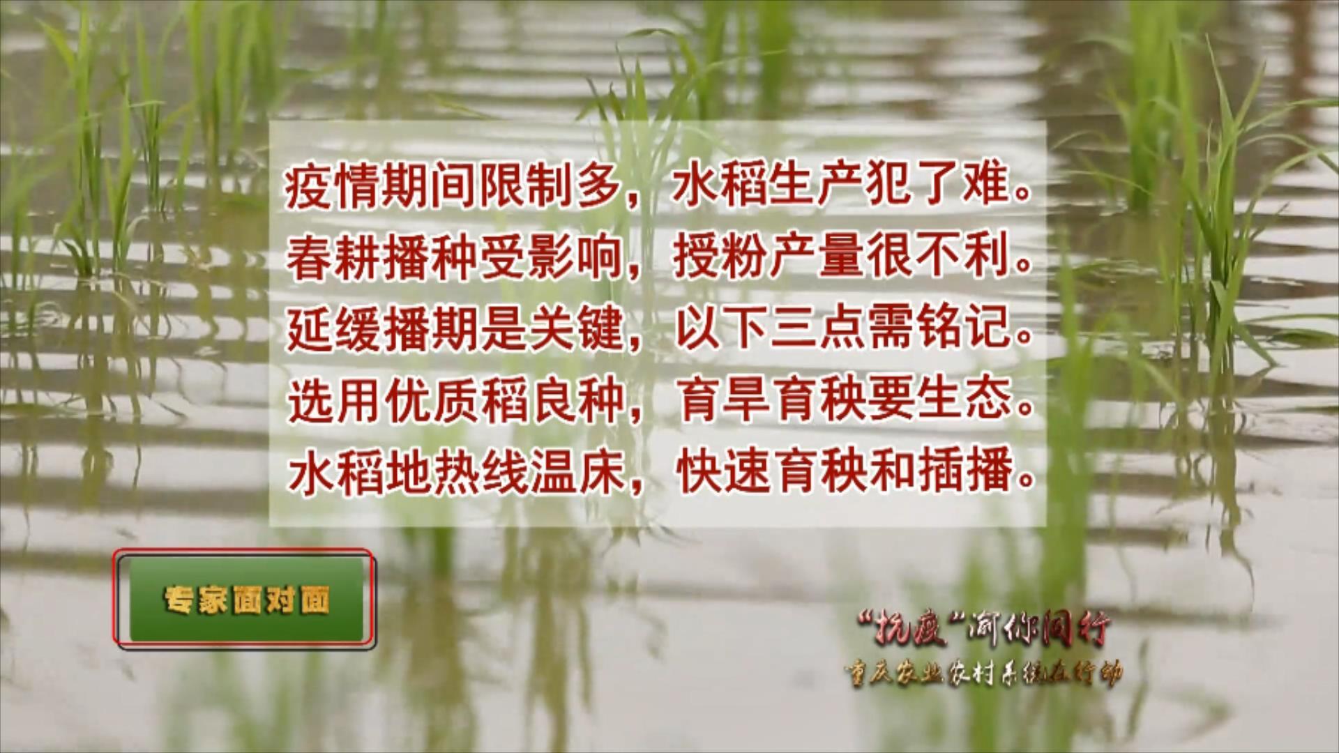 对水稻种植工作的影响及解决办法