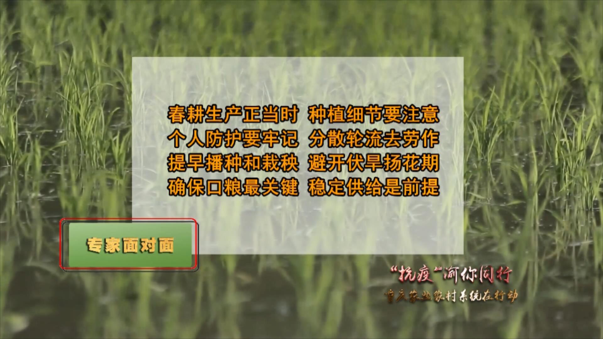 水稻种植需要注意哪些问题?