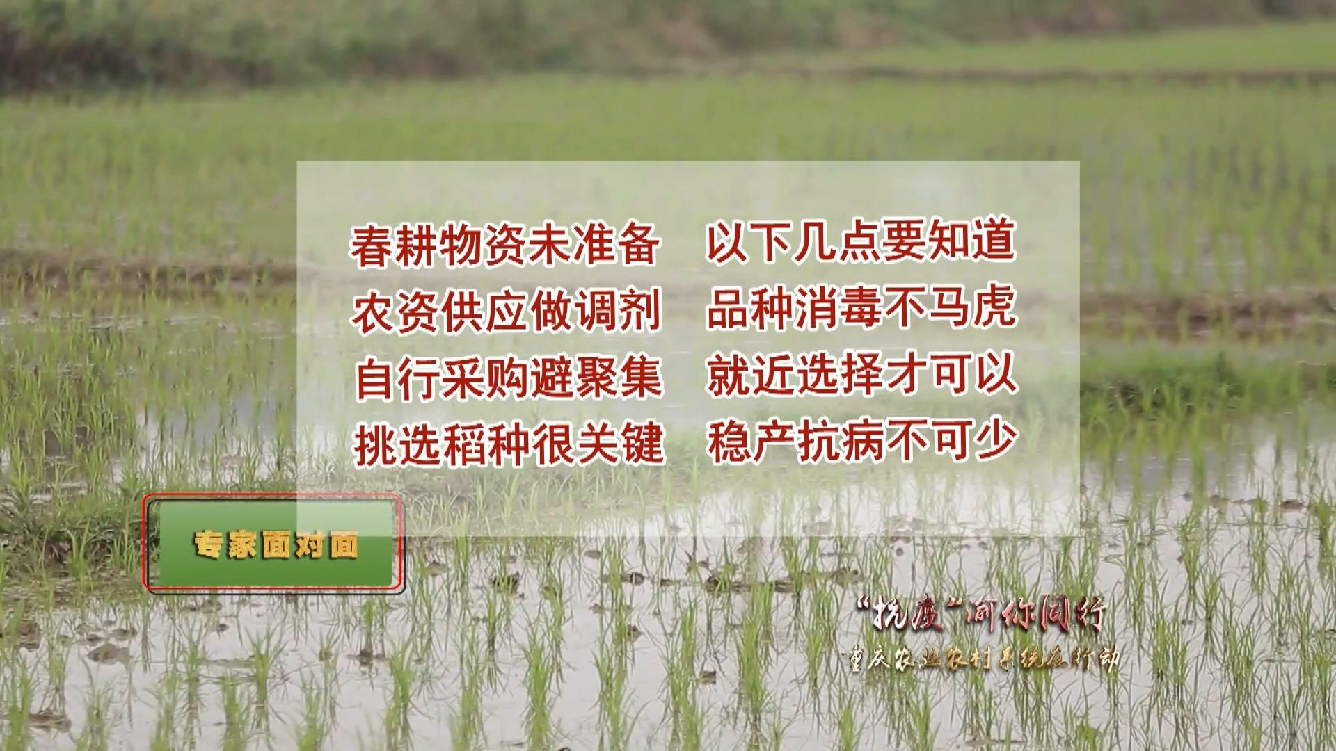【天天农事通】专家面对面——新型冠状病毒肺炎疫情期间,水稻农资采购怎么办?