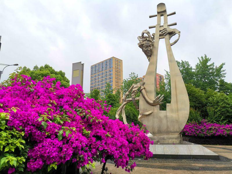 天安数码城附近的三角梅,琵琶红梅赞夏天。(摄影:黄向辉)