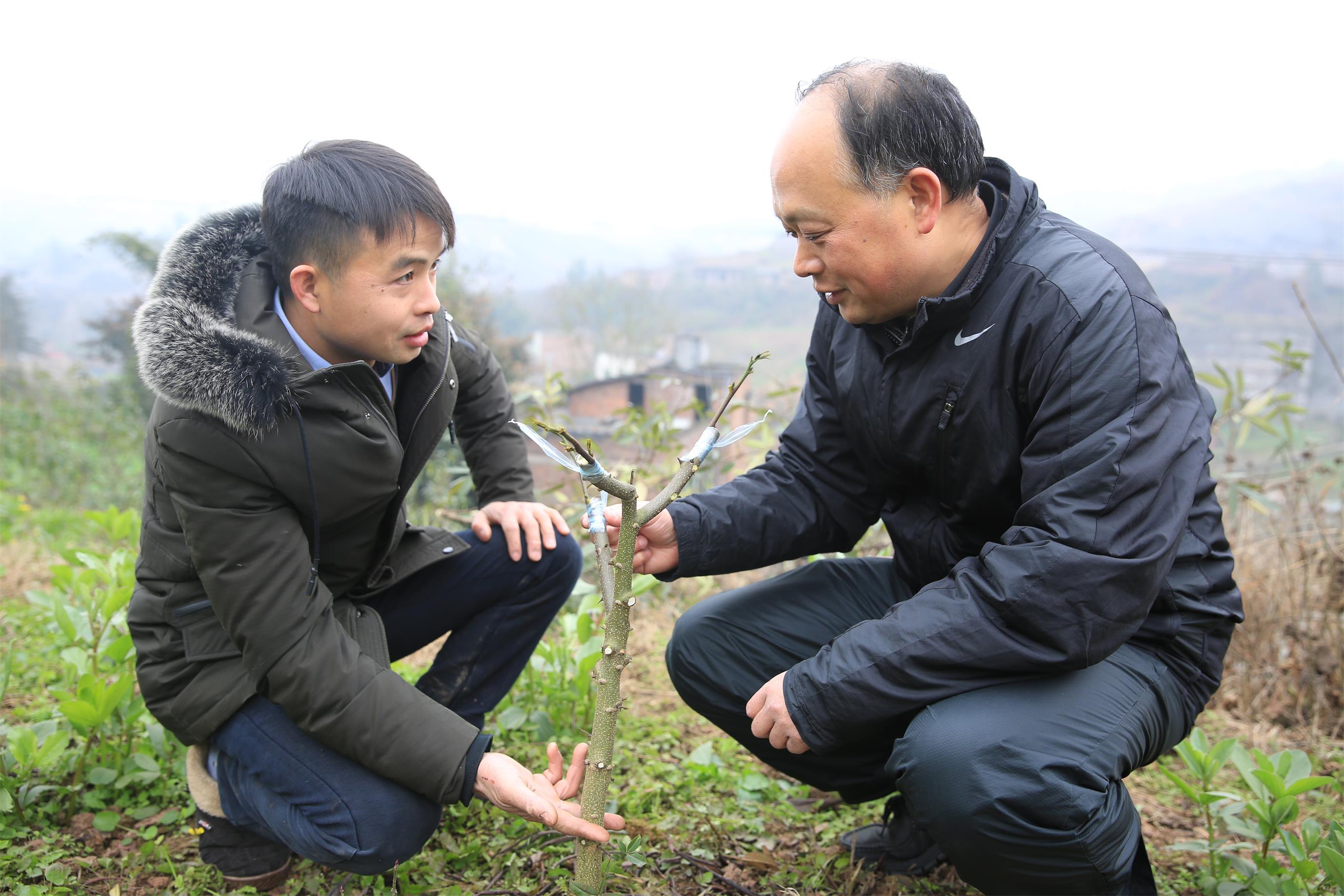 指导村民种植花椒.jpg