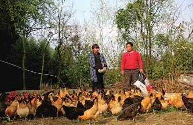 重庆渝北:村容村貌大变样,农民致富奔小康