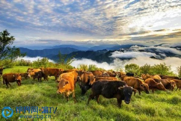 在岚天乡里还隐藏着一处别致景色,高山草甸——锅底凼!群山高耸、峰聚壑连、气象壮观,山顶草场成片、牛马成群。 陶海峰 摄