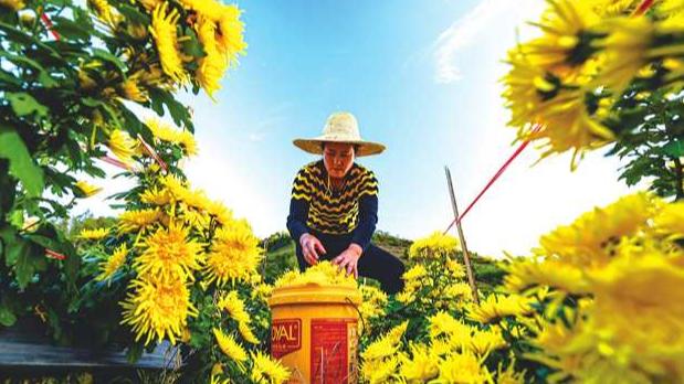 重庆秀山 在特色产业中探寻致富密码
