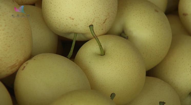黄冠梨优质栽培技术