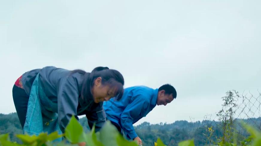 重庆巴南:赖清政心中有本账