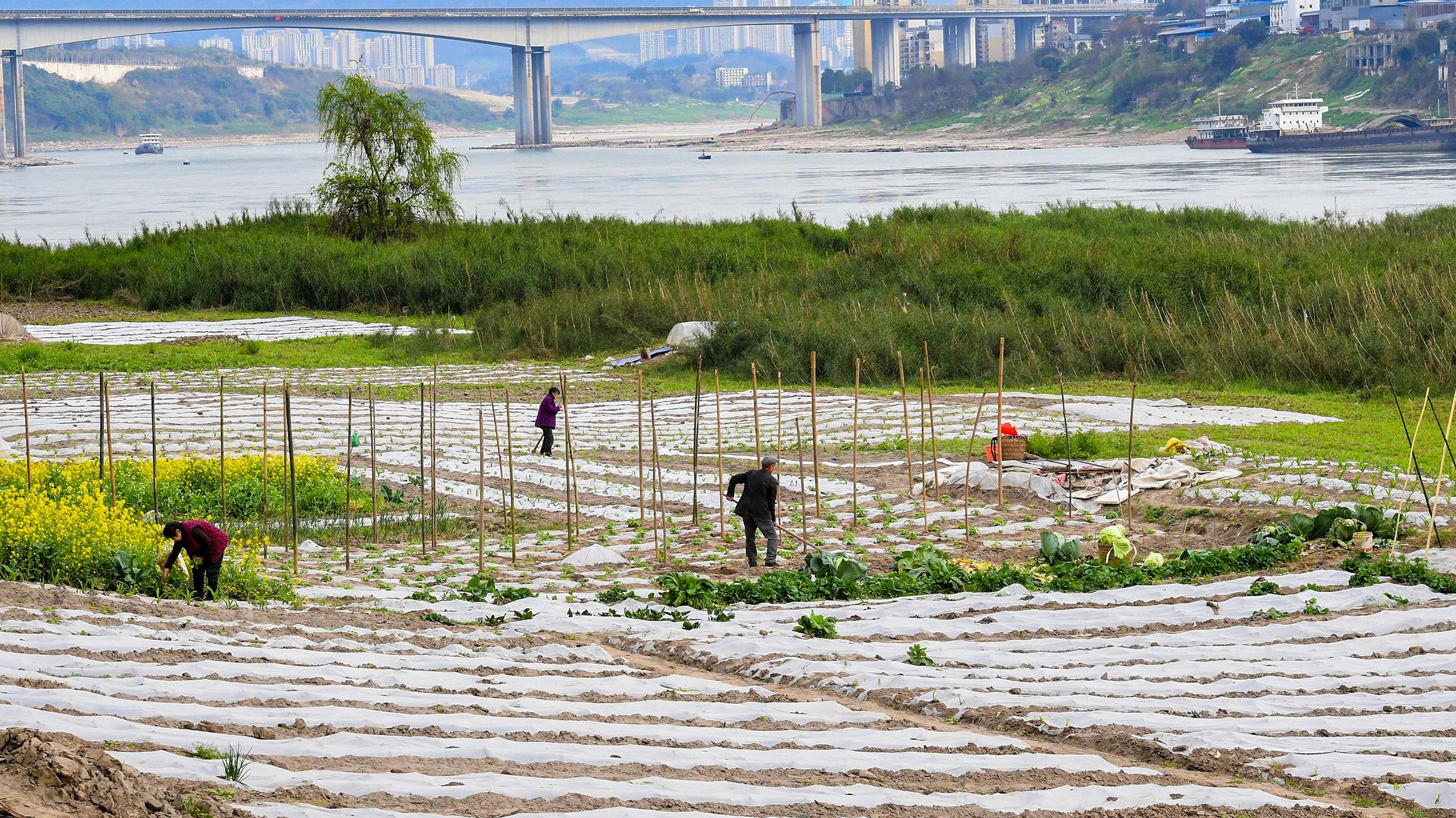 重庆大渡口:不负农时不负春