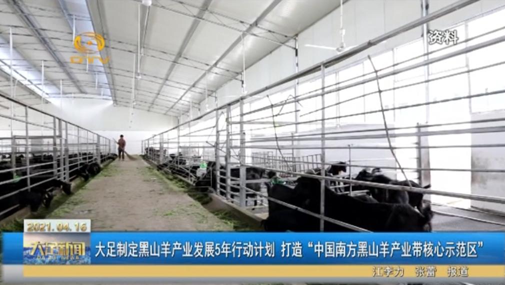 """大足制定黑山羊产业发展5年行动计划 打造""""中国南方黑山羊产业带核心示范区"""""""