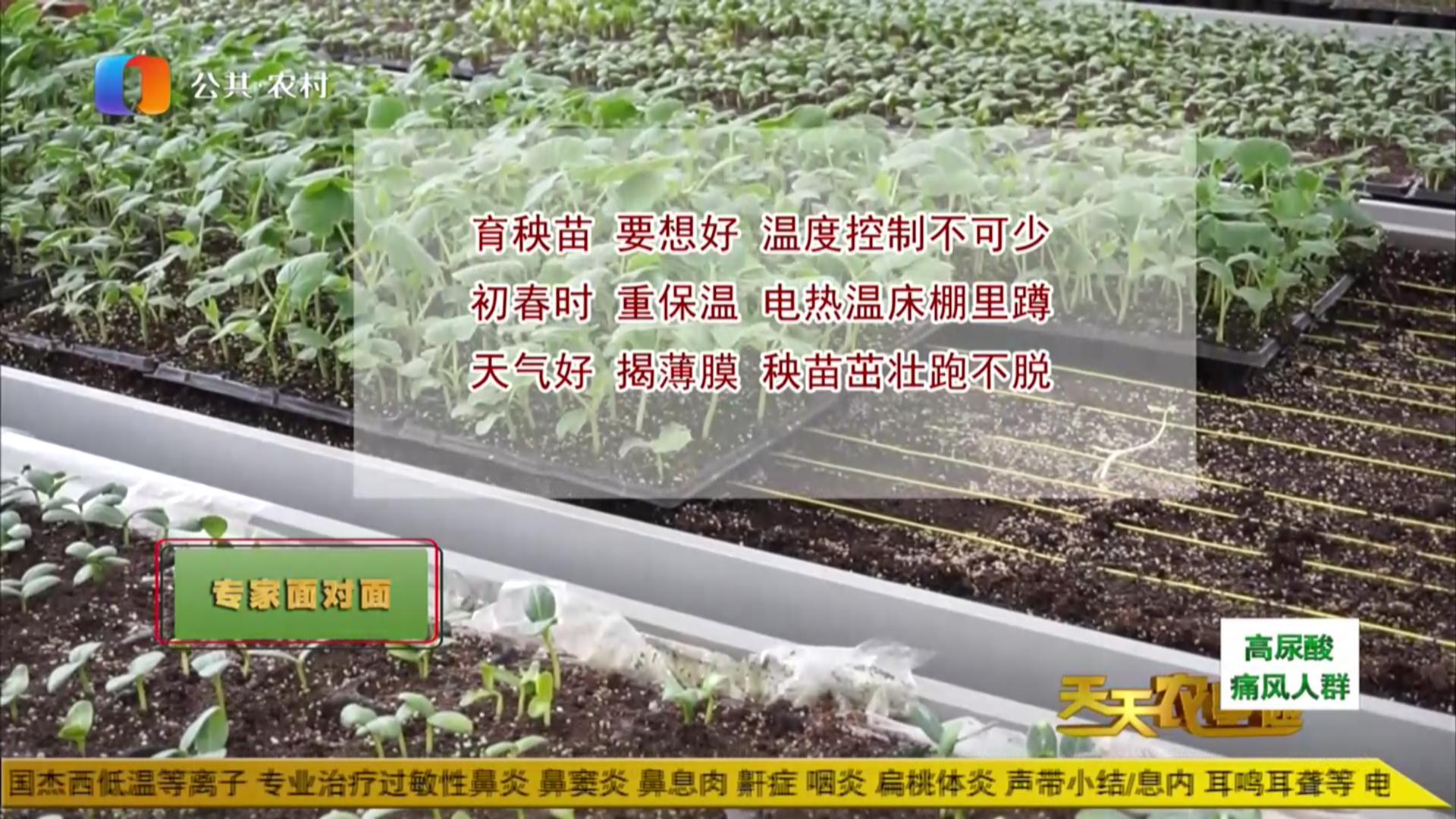 专家面对面——辣椒苗的春季育苗栽培