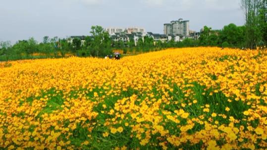 重庆铜梁:在静美的河谷 邂逅夏花绚烂的时节