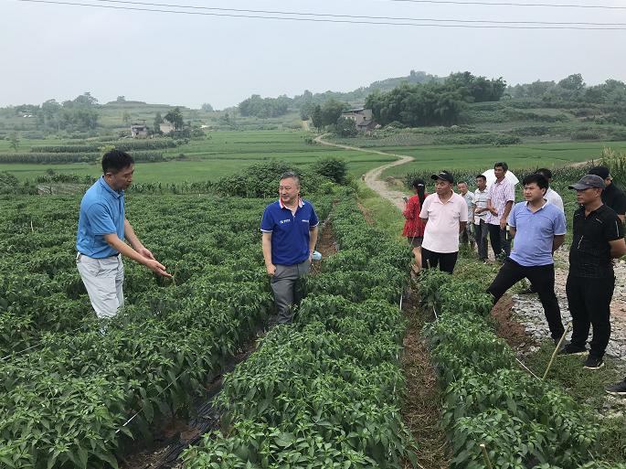 市级专家为钱塘镇指导辣椒种植把脉支招