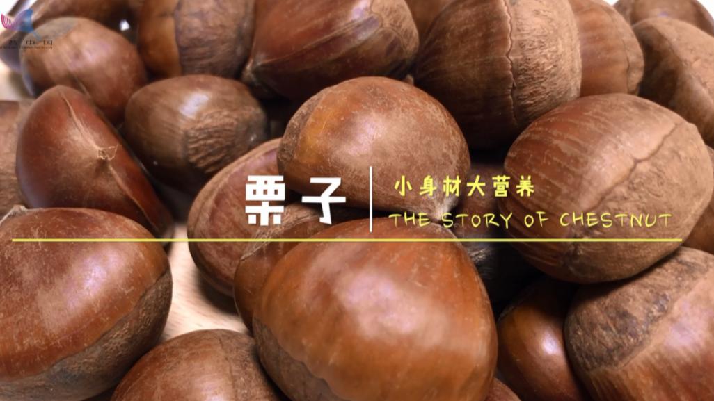 【识物园】栗子 小身材大营养