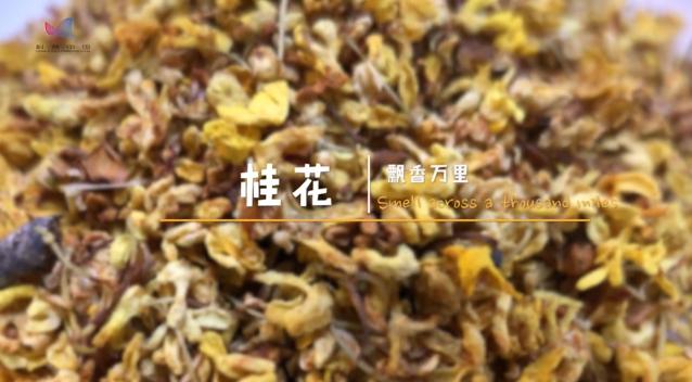 【识物园】桂花 飘香万里