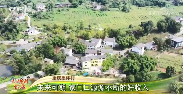 [走进乡村看小康]重庆集体村 向往生活山林间 一脉村居展新颜