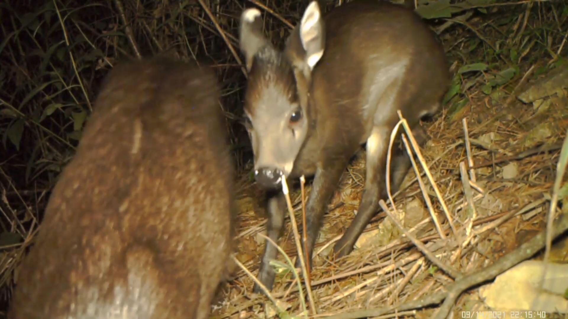 武陵山自然保护区记录到多种野生动物活动影像