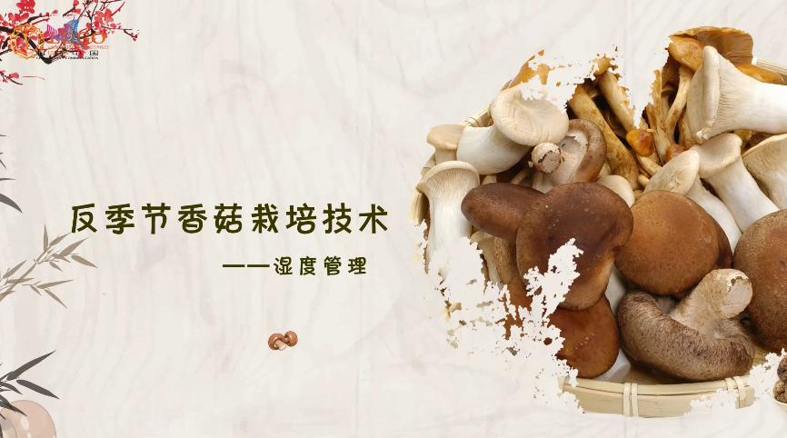 反季节香菇栽培技术——湿度管理